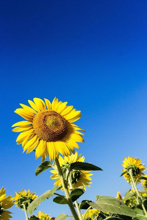 紫外線対策は食べ物で!日焼け止め用サプリメントも人気です。