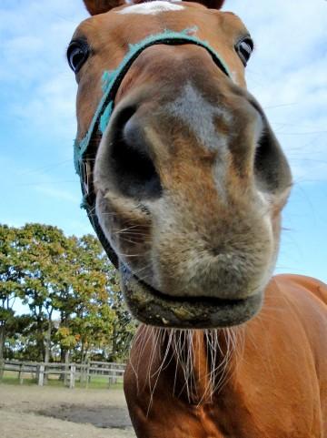 小鼻を小さくするマッサージ方法!鼻の穴は加齢で広がる?